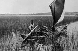 Karl Jost w łodzi wypełnionej wodorostami wykorzystywanymi do użyźniania ziemi. Jezioro Gardno, 1938.