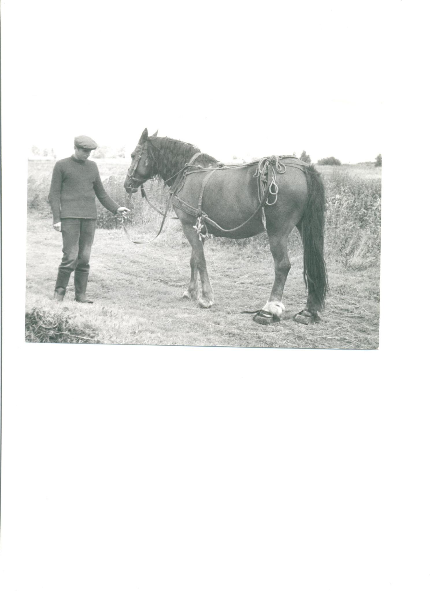 Herwig Pollex z koniem w klumpach (na tylnych nogach), które zakładano, by kopyta nie grzęzły w torfowej ziemi. Kluki, lata 70.