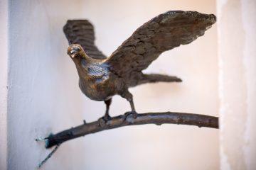 Legenda o złotym gołębiu nadal żyje i pobudza wyobraźnię